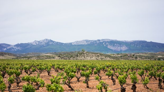 Ortsweine Gebietsweine Rioja