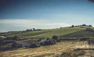 Valori vineyard