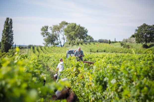 Winzer bei der Ernte in der AOP Côtes du Rhône