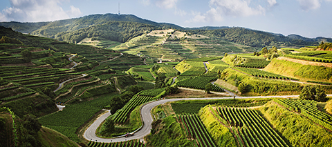 Ein Landschaftsbild aus der Weinanbauregion Baden.