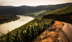 Blick auf das Weinanbaugebiet Mittelrhein