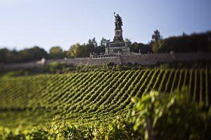 Stimmungsbild aus dem Weinanbaugebiet Rheingau